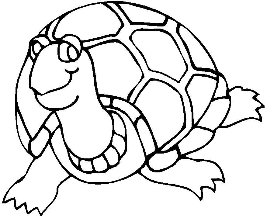 Les coloriages - les tortues terrestres - vivelestortues.com