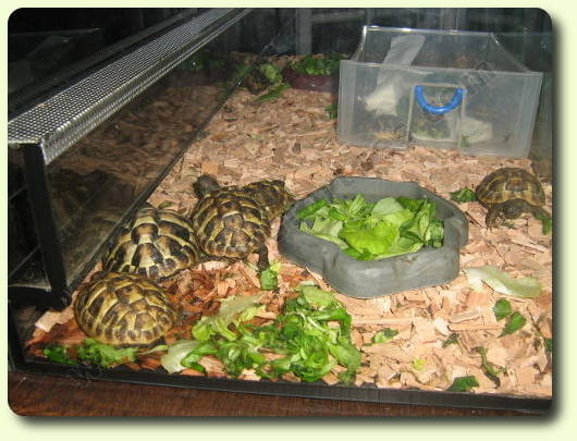 amenagement terrarium tortue hermann